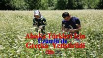 Ahıska Türkleri İçin Üzümlü'de Greçka Yetiştirildi