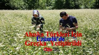 Üzümlü'de Ahıska Türkleri Için ''Greçka'' Yetiştirildi